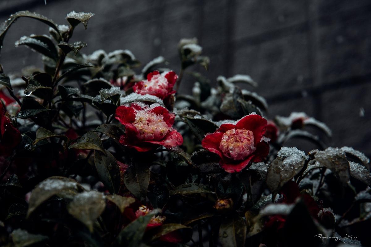 『雜記東京』{life} 下雪的春分